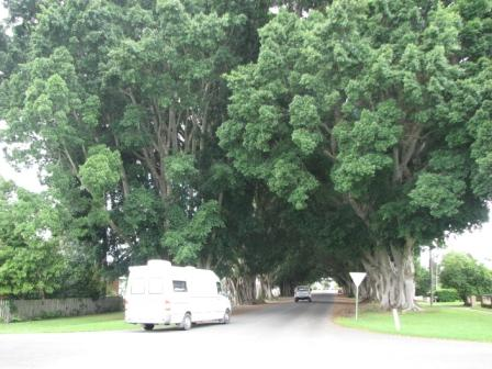 fig tree avenue
